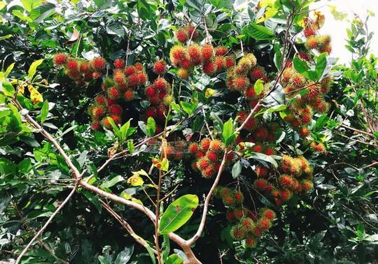 Càn quét thoả thích vườn trái cây chỉ với 50.000 đồng - Ảnh 1.