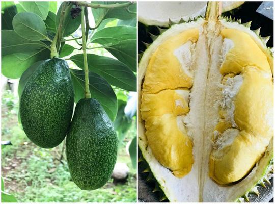Càn quét thoả thích vườn trái cây chỉ với 50.000 đồng - Ảnh 7.