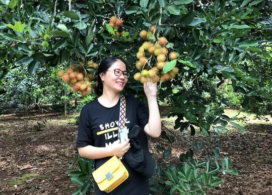 Càn quét thoả thích vườn trái cây chỉ với 50.000 đồng - Ảnh 2.