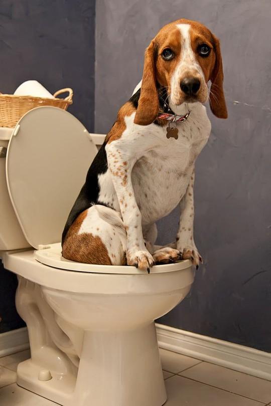 Cẩn trọng khi có vật nuôi trong nhà kẻo tiền tán, bệnh tật - Ảnh 3.