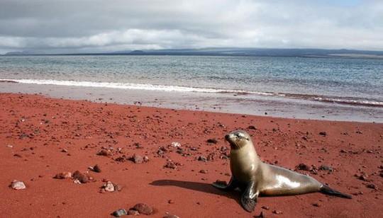 Những bãi biển lạ nhất thế giới ai cũng muốn đến một lần - Ảnh 14.