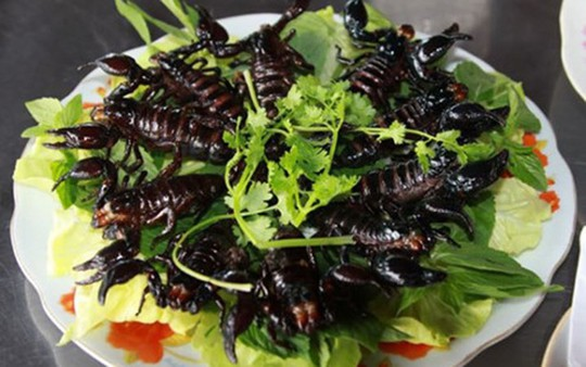 Đặc sản ngon trứ danh: bọ cạp vùng Bảy Núi! - Ảnh 5.