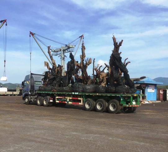 Nhiều cây tiểu quái thú đi bằng đường thủy ra Bắc - Ảnh 1.