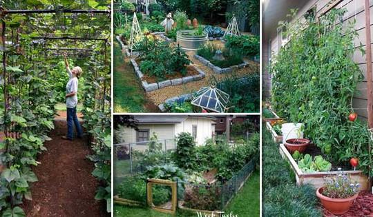 Sáng tạo này sẽ biến đất trống thành vườn rau đẹp - Ảnh 1.