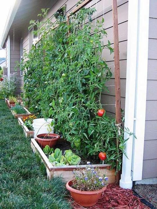Sáng tạo này sẽ biến đất trống thành vườn rau đẹp - Ảnh 11.