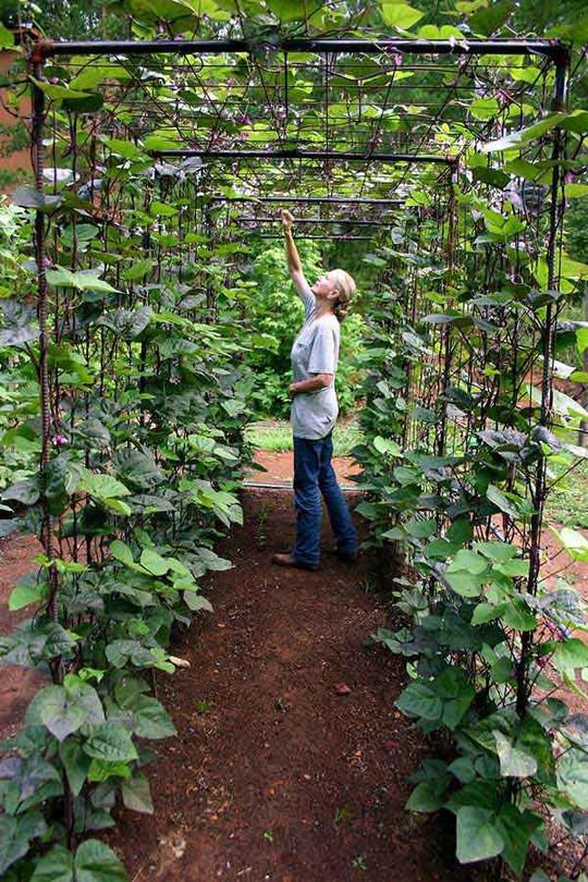Sáng tạo này sẽ biến đất trống thành vườn rau đẹp - Ảnh 13.