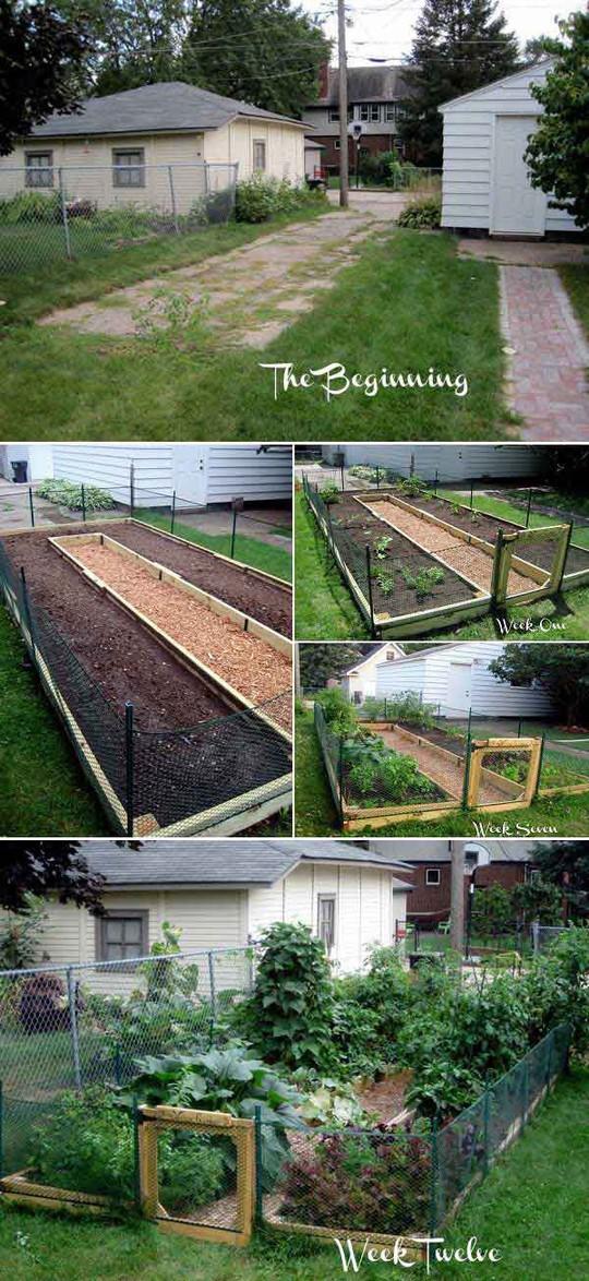Sáng tạo này sẽ biến đất trống thành vườn rau đẹp - Ảnh 6.