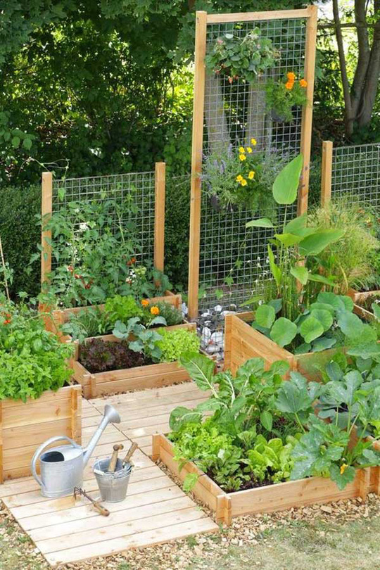 Sáng tạo này sẽ biến đất trống thành vườn rau đẹp - Ảnh 9.