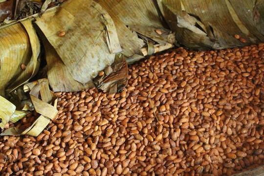 Hành trình biến hạt ca cao thành món chocolate vạn người mê - Ảnh 8.