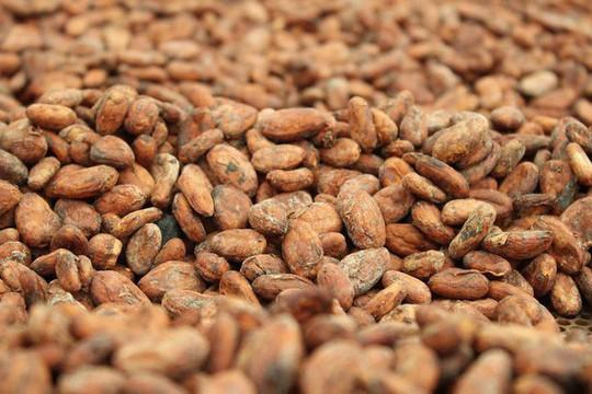 Hành trình biến hạt ca cao thành món chocolate vạn người mê - Ảnh 9.