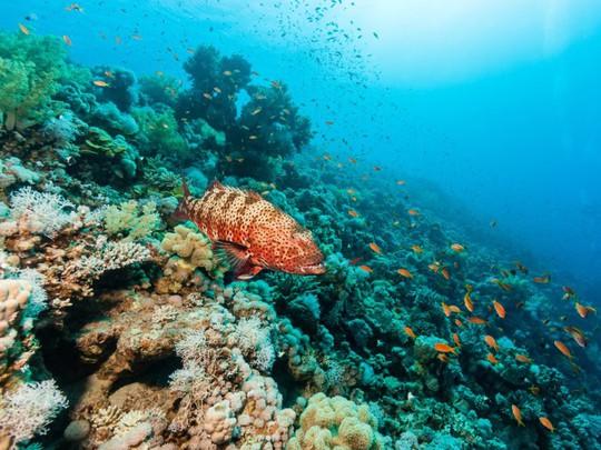 Lạc xuống thủy cung với loạt ảnh đại dương đẹp ngỡ ngàng - Ảnh 10.
