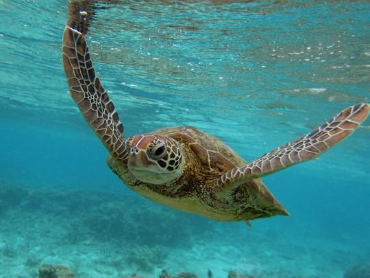 Lạc xuống thủy cung với loạt ảnh đại dương đẹp ngỡ ngàng - Ảnh 11.