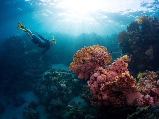 Lạc xuống thủy cung với loạt ảnh đại dương đẹp ngỡ ngàng - Ảnh 12.