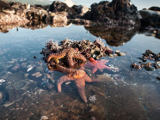 Lạc xuống thủy cung với loạt ảnh đại dương đẹp ngỡ ngàng - Ảnh 16.
