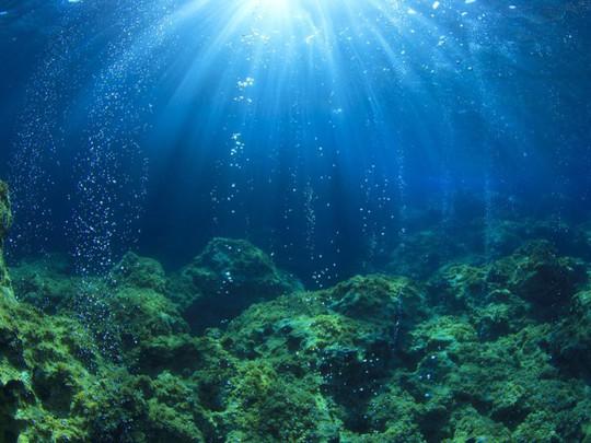 Lạc xuống thủy cung với loạt ảnh đại dương đẹp ngỡ ngàng - Ảnh 1.