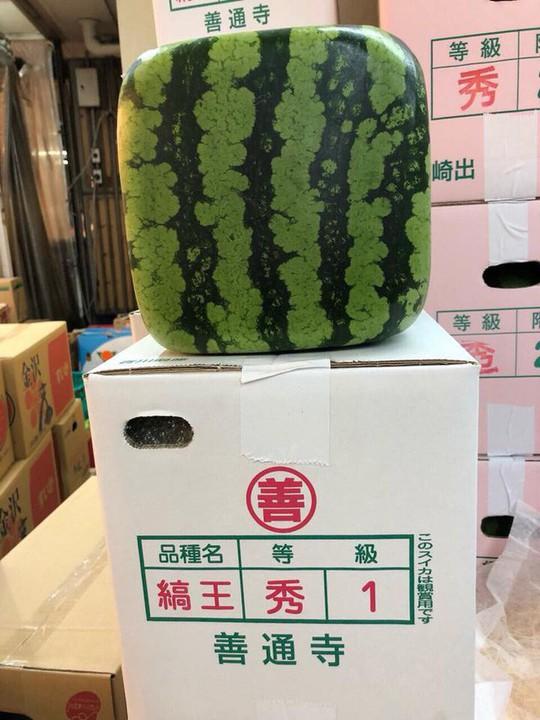 Dưa hấu vuông Nhật Bản xuất hiện ở Hà Nội: Giá chát 4,5 triệu đồng/quả - Ảnh 2.