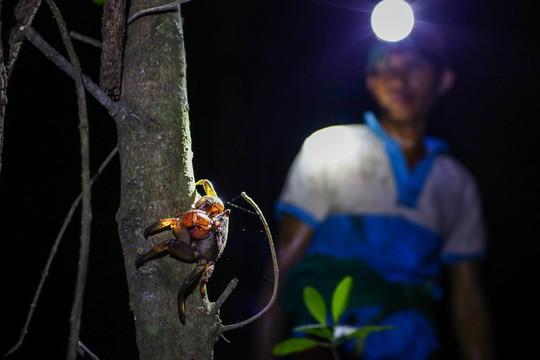 Cần Giờ: Lội rừng ngập mặn bắt ba khía trong đêm - Ảnh 6.