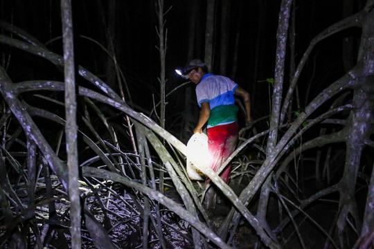 Cần Giờ: Lội rừng ngập mặn bắt ba khía trong đêm - Ảnh 2.