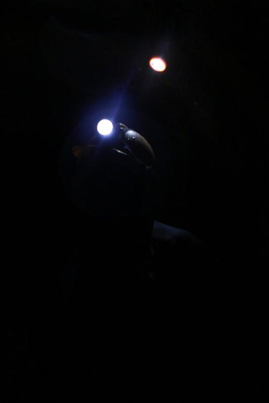 Những đốm sáng lặng lẽ - Ảnh 7.