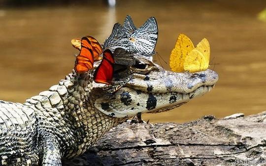 Chuyện 2 con cá sấu và sức mạnh thần kỳ của việc… không làm gì cả - Ảnh 1.