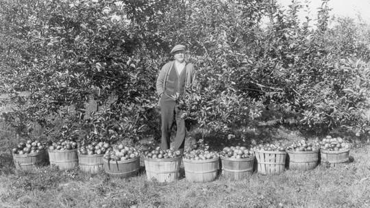 Vườn táo gần 300 tuổi đẹp như ở xứ sở thiên đường - Ảnh 1.