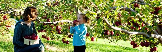 Vườn táo gần 300 tuổi đẹp như ở xứ sở thiên đường - Ảnh 13.