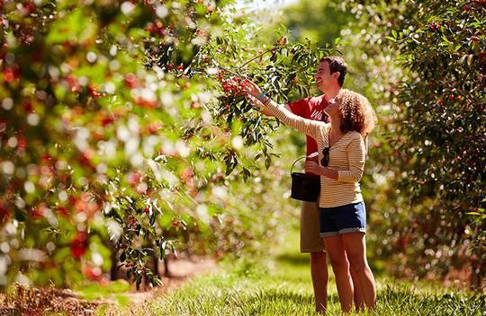Vườn táo gần 300 tuổi đẹp như ở xứ sở thiên đường - Ảnh 14.