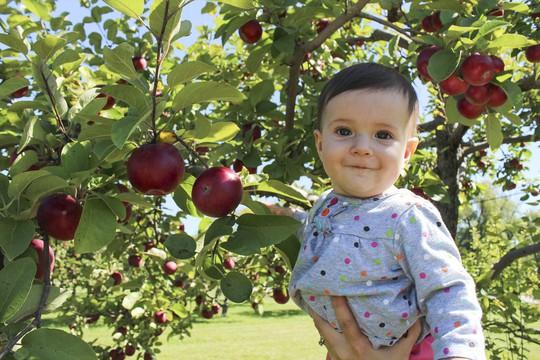 Vườn táo gần 300 tuổi đẹp như ở xứ sở thiên đường - Ảnh 16.