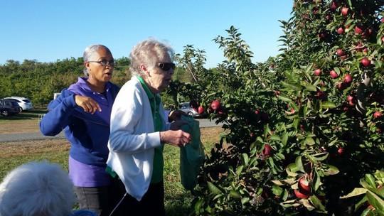 Vườn táo gần 300 tuổi đẹp như ở xứ sở thiên đường - Ảnh 18.