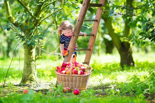 Vườn táo gần 300 tuổi đẹp như ở xứ sở thiên đường - Ảnh 20.
