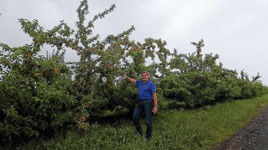 Vườn táo gần 300 tuổi đẹp như ở xứ sở thiên đường - Ảnh 21.