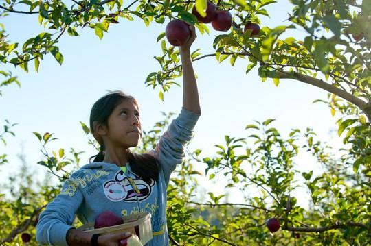 Vườn táo gần 300 tuổi đẹp như ở xứ sở thiên đường - Ảnh 24.