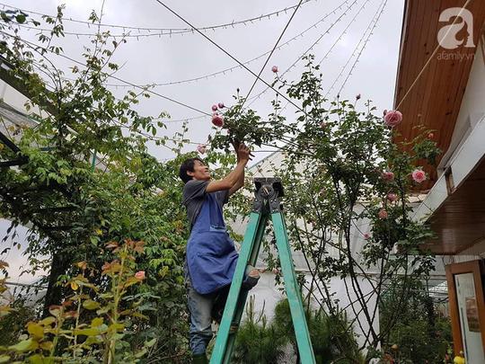 Mê mẩn khu vườn hoa hồng đẹp như mơ ở Đà Lạt - Ảnh 1.