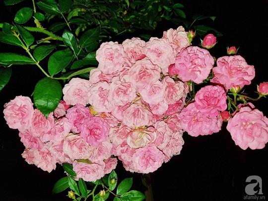 Mê mẩn khu vườn hoa hồng đẹp như mơ ở Đà Lạt - Ảnh 25.