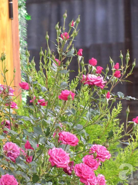 Mê mẩn khu vườn hoa hồng đẹp như mơ ở Đà Lạt - Ảnh 4.