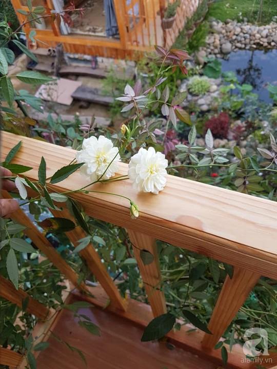 Mê mẩn khu vườn hoa hồng đẹp như mơ ở Đà Lạt - Ảnh 21.