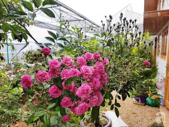 Mê mẩn khu vườn hoa hồng đẹp như mơ ở Đà Lạt - Ảnh 27.