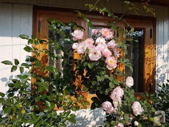Mê mẩn khu vườn hoa hồng đẹp như mơ ở Đà Lạt - Ảnh 8.