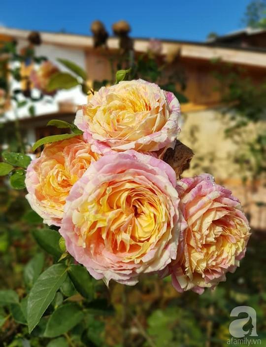 Mê mẩn khu vườn hoa hồng đẹp như mơ ở Đà Lạt - Ảnh 28.