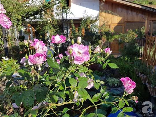 Mê mẩn khu vườn hoa hồng đẹp như mơ ở Đà Lạt - Ảnh 10.