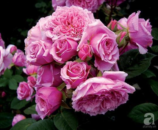 Mê mẩn khu vườn hoa hồng đẹp như mơ ở Đà Lạt - Ảnh 30.