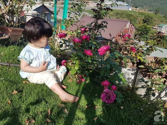 Mê mẩn khu vườn hoa hồng đẹp như mơ ở Đà Lạt - Ảnh 14.
