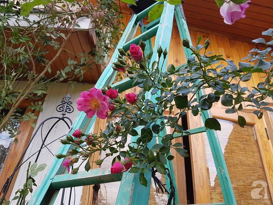 Mê mẩn khu vườn hoa hồng đẹp như mơ ở Đà Lạt - Ảnh 16.