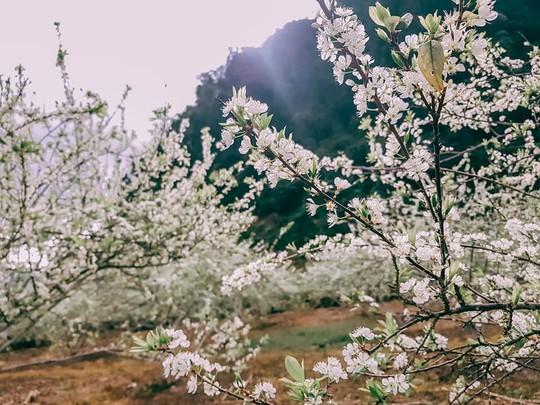 Đến Sơn La, đừng quên khám phá những địa danh tuyệt đẹp này - Ảnh 5.