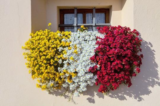Những khung cửa sổ đẹp hút hồn nhờ sắc hoa rực rỡ - Ảnh 1.