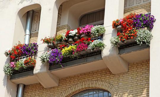 Những khung cửa sổ đẹp hút hồn nhờ sắc hoa rực rỡ - Ảnh 2.