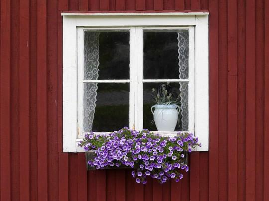 Những khung cửa sổ đẹp hút hồn nhờ sắc hoa rực rỡ - Ảnh 13.