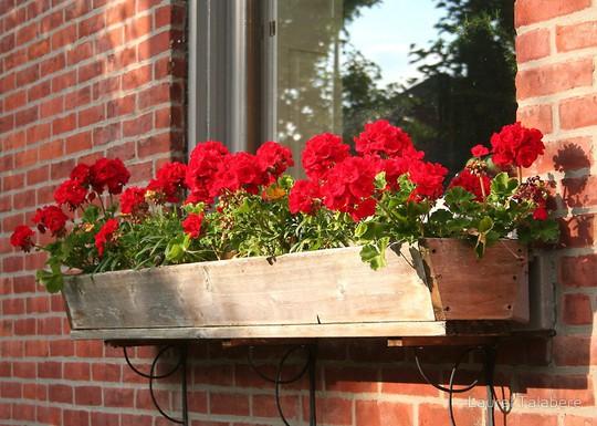 Những khung cửa sổ đẹp hút hồn nhờ sắc hoa rực rỡ - Ảnh 15.