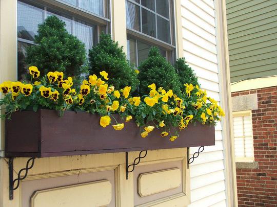 Những khung cửa sổ đẹp hút hồn nhờ sắc hoa rực rỡ - Ảnh 16.