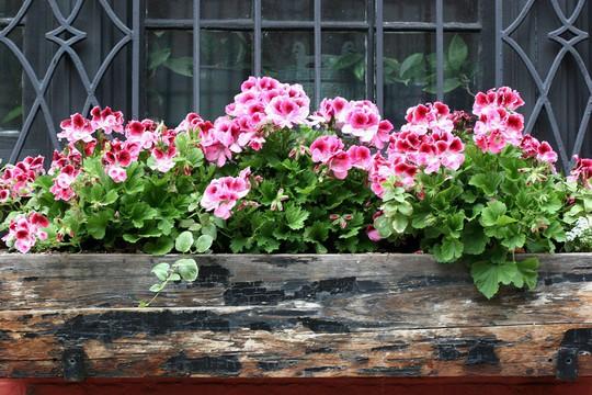 Những khung cửa sổ đẹp hút hồn nhờ sắc hoa rực rỡ - Ảnh 17.